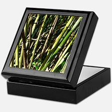 Bamboo Canes Keepsake Box
