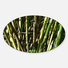 Bamboo Canes Sticker (Oval)