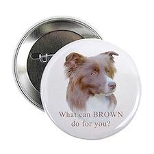 Border Collie BROWN Button