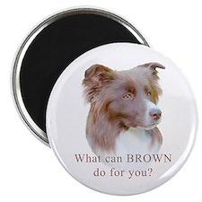 Border Collie BROWN Magnet