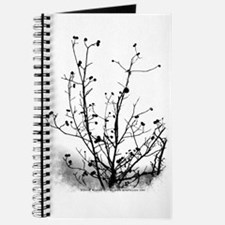 Leaf-Bare Walnut Tree Journal