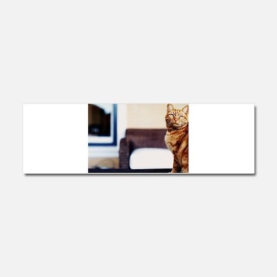 Cat Car Magnet 10 x 3