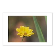 Wildflower in Bloom Postcards (Package of 8)