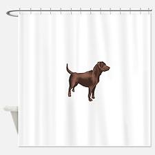 chocolate lab Shower Curtain