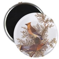 Cedar Waxwing Birds Magnets