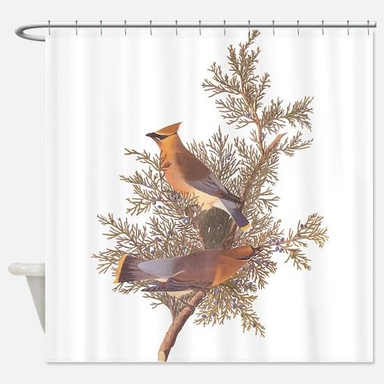 Cedar Waxwing Birds Shower Curtain