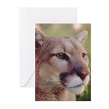 Cute Cougars Greeting Cards (Pk of 10)