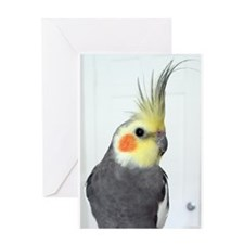 Cockatiel Photo Greeting Cards