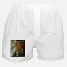 Red Burmese Cat Boxer Shorts