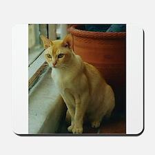 Red Burmese Cat Mousepad