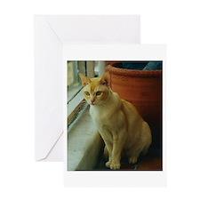 Red Burmese Cat Greeting Cards
