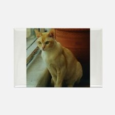 Red Burmese Cat Magnets