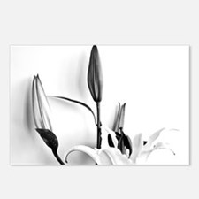 Flowers Lilium Postcards (Package of 8)