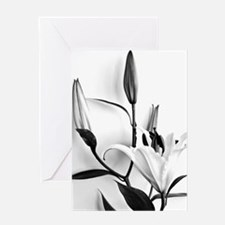 Flowers Lilium Greeting Cards