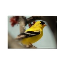 Cute Gold finch Rectangle Magnet