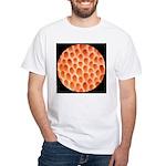 Spongy Cap Mushroom 20X White T-Shirt