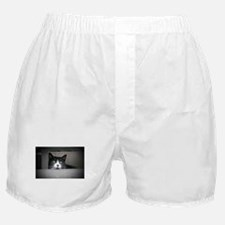 Schubert the cat daydreaming Boxer Shorts