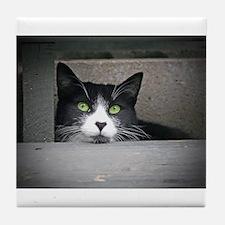 Schubert the cat daydreaming Tile Coaster