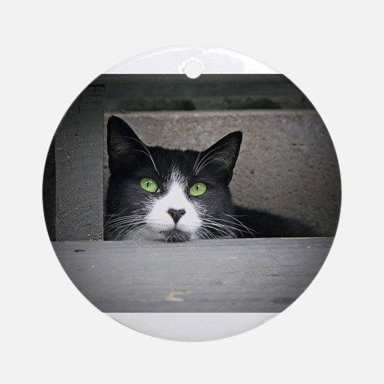 Schubert the cat daydreaming Ornament (Round)