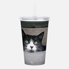 Schubert the cat daydr Acrylic Double-wall Tumbler