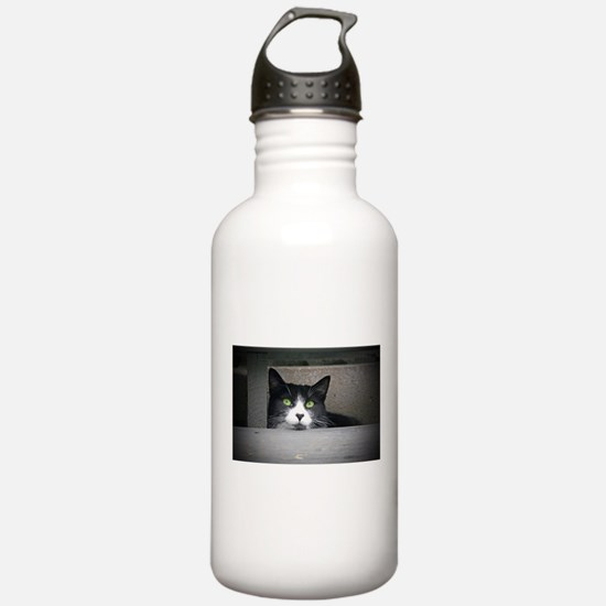Schubert the cat daydr Water Bottle