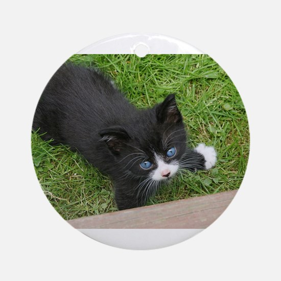 Schubert the playing cat Ornament (Round)