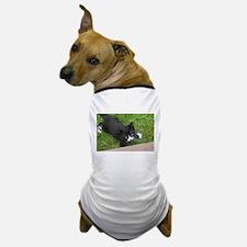 Schubert the playing cat Dog T-Shirt