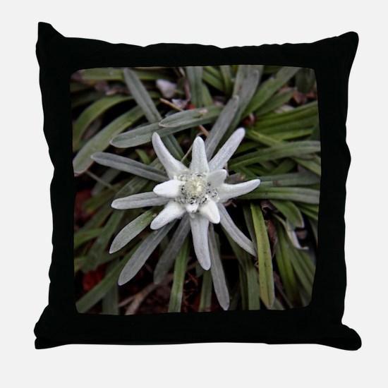 White Alpine Edelweiss Flower Throw Pillow