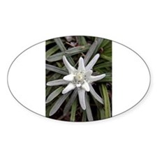 White Alpine Edelweiss Flower Decal