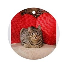 Sweetheart Daisy Valentne Heart p Ornament (Round)