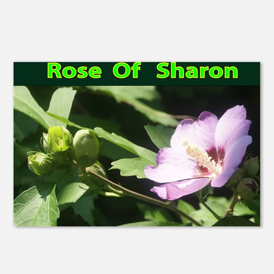 Rose of Sharon Postcards (Package of 8)