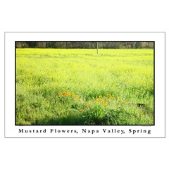mustard flower napa valley spring large posters