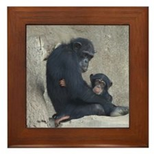 Chimpanzee Baby and Mummy Framed Tile