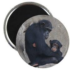 Chimpanzee Baby and Mummy Magnets