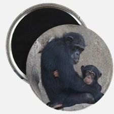 Chimpanzee Baby and Mummy Magnets