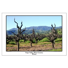 Napa Valley, Wine Country - Winter - Posterss