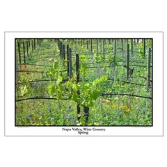 napa valley wine country spring, large posters