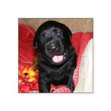 "Black Lab Puppy Square Sticker 3"" x 3"""
