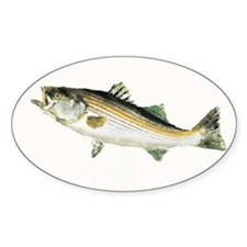 Cool Striped bass Decal