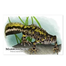Marbled Newt Postcards (Package of 8)