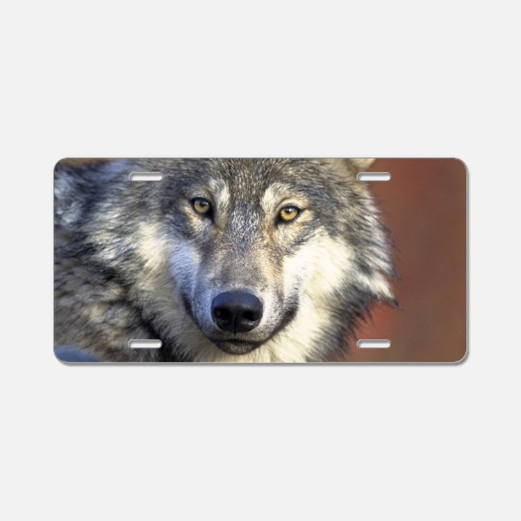 grey wolf car accessories auto stickers license plates more cafepress. Black Bedroom Furniture Sets. Home Design Ideas