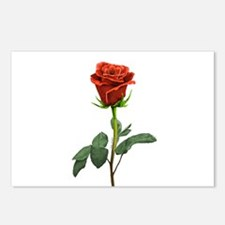 long stem red rose for valentines day Postcards (P