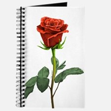 long stem red rose for valentines day Journal