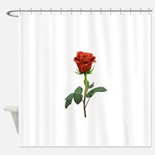 long stem red rose for valentines day Shower Curta