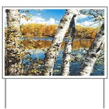 Birch Trees D Yard Sign
