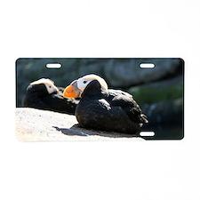 Cute Seabird Aluminum License Plate