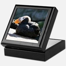 Tufted Puffins Keepsake Box