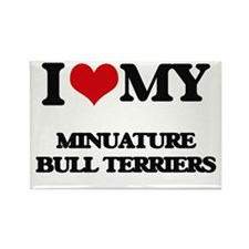 I love my Minuature Bull Terriers Magnets