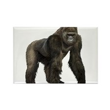 Cute Gorilla Rectangle Magnet (10 pack)
