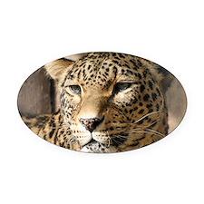 Leopard001 Oval Car Magnet